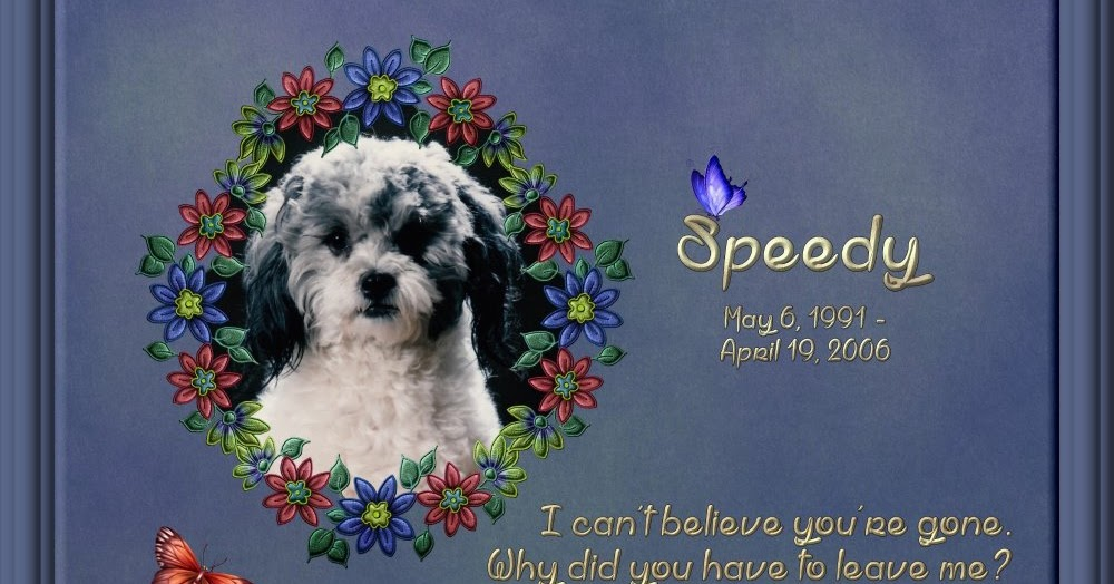 Hundegedichte Mehr Dog Poems More For My Beloved Dog Speedy