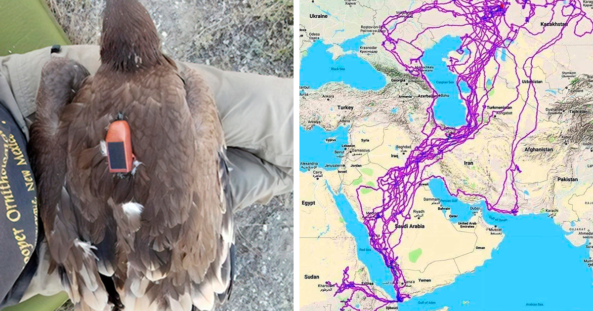 Map Depicts All The Places Eagles Visited In One Year, And It's Curious That They Stayed Clear Of The Sea