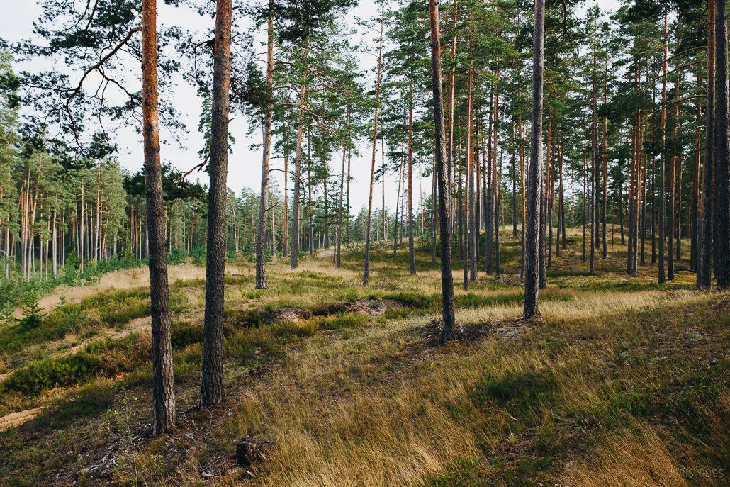 garkalnes mežī