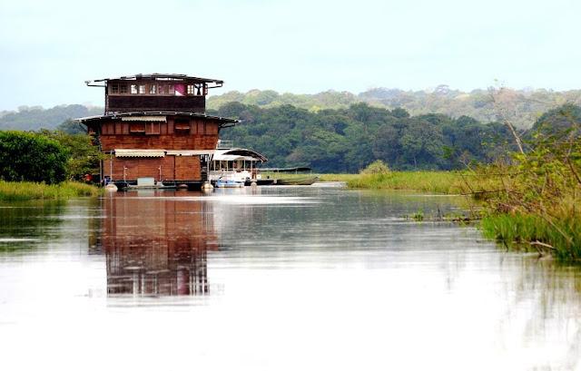 Frans-Guyana, Guyane, Amazonewoud