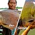 """El Paco y la Gamitana: """"Peces Amazónicos para el Mundo"""""""