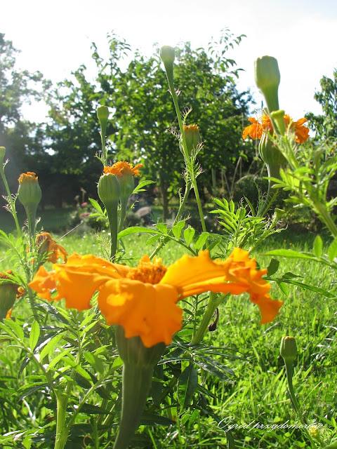 jesienne kolory, barwy jesieni, ogród przydomowy