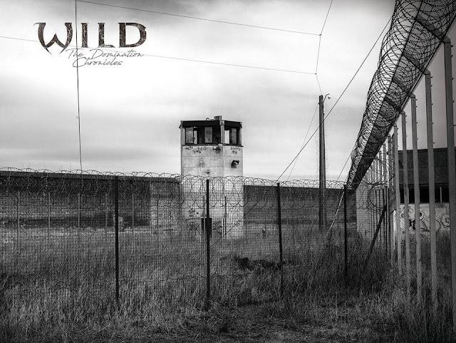 W.I.L.D., l'interview