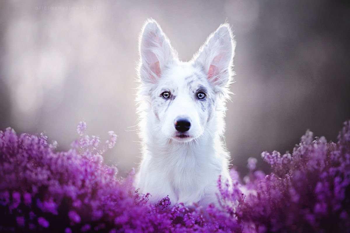 Портреты собак by Alicja Zmyslowska