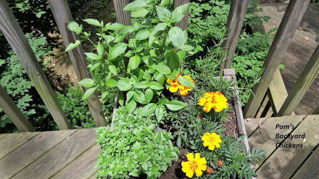 Planting herbs in pots has benefits for everyone from the space-starved gardener to the gardener with poor soil and everyone in between.