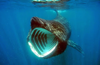 10 Hiu Paling Unik Di Dunia