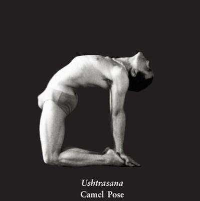 ॐ yogasanity  dharma yoga challenge day 17 ॐ camel pose