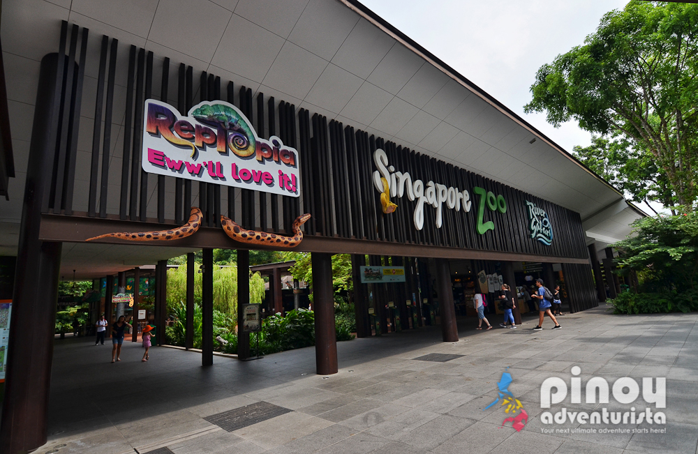 Singapore Zoo and Night Safari Adventure (with Tips and