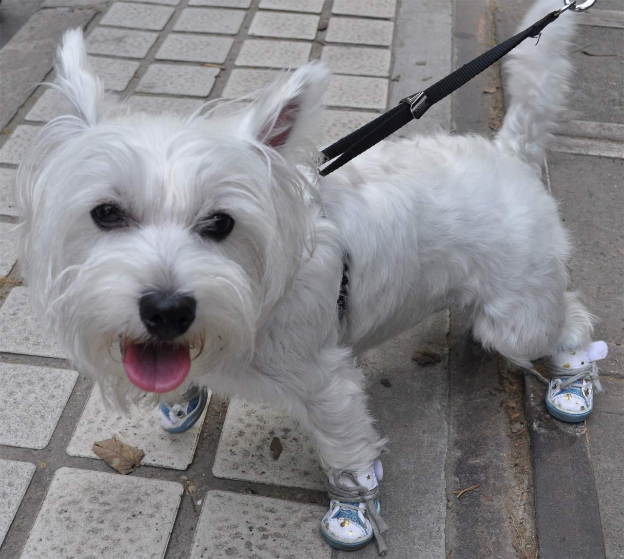 To Comfort The Dogs And Look Pretty Beautiful Dog Shoes