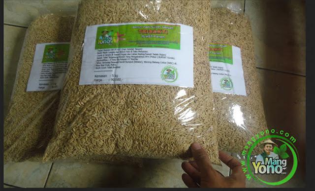 Petani Subang, Jabar  Pembeli Benih Padi TRISAKTI 75 HST Panen   sebanyak 10 Kg atau 2 Bungkus