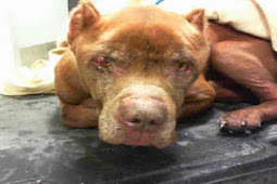 Nobody saw him as worthy of saving so he is now on euth URGENT list