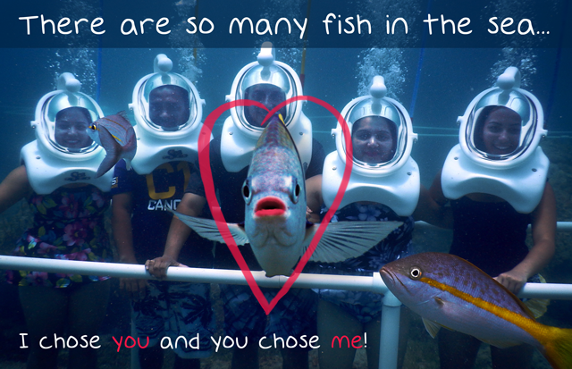 Valentine ecard free sea trek so many fish in the sea