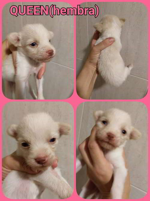 cachorra talla pequena 2