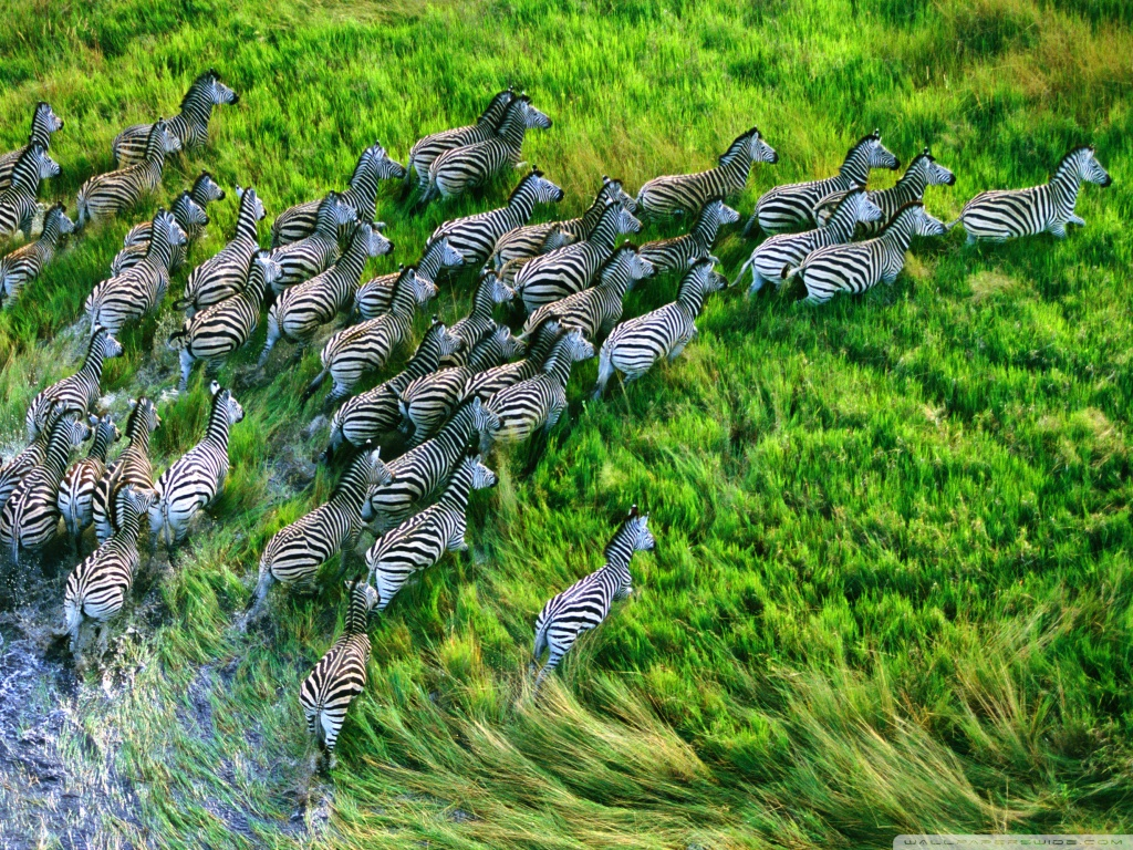 40 Free Hd Retina Display Ipad 3 Wallpapers: Top 20 Most Cute And Dashing Zebra Wallpapers In HD