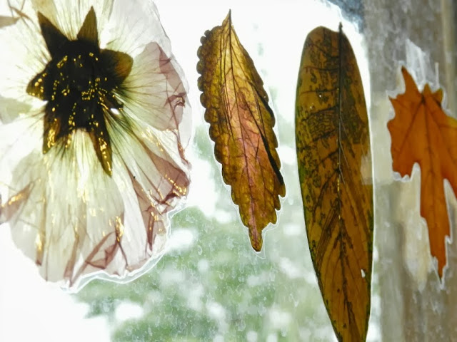 Laminated Dried Fall Leaves