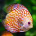 8 Beautiful fish species for aquarium