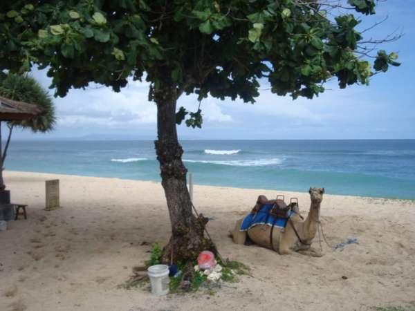 7 Destinasi yang Wajib Dikunjungi di Bali - Nusa Dua