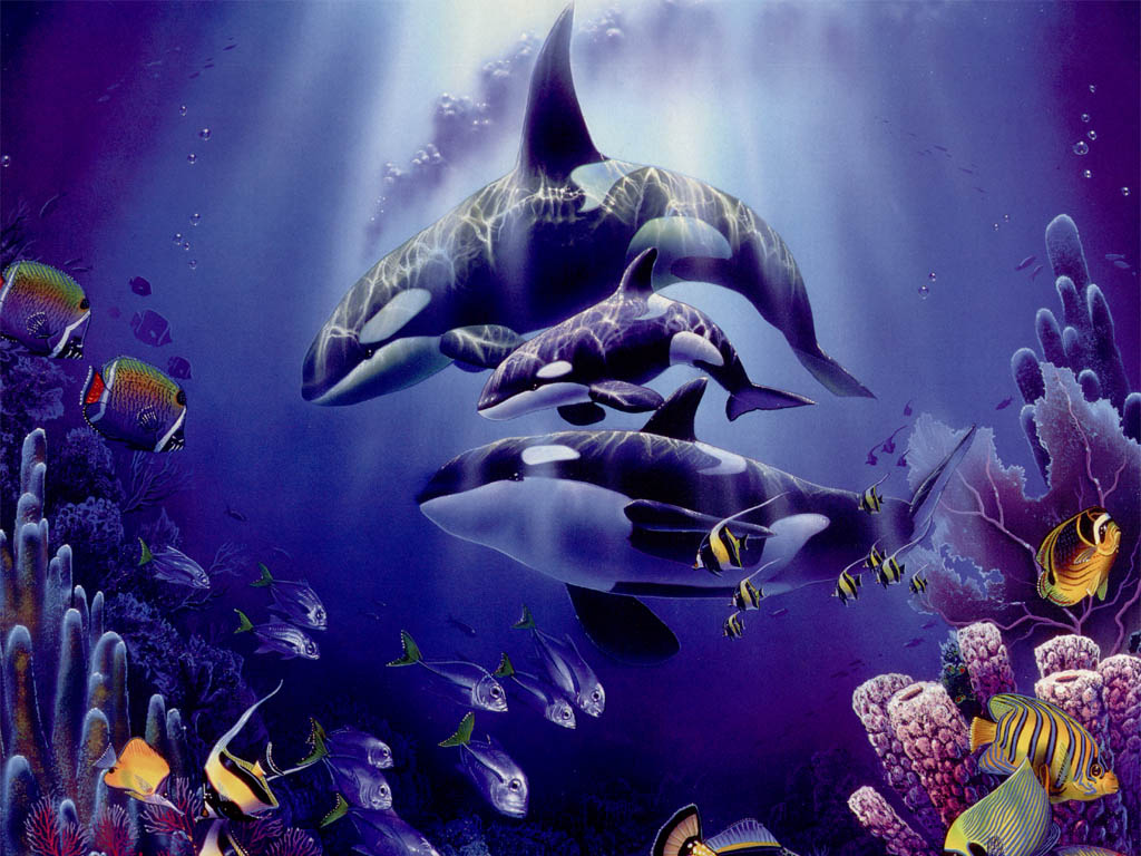Killer Whales Wallpapers Animals Library