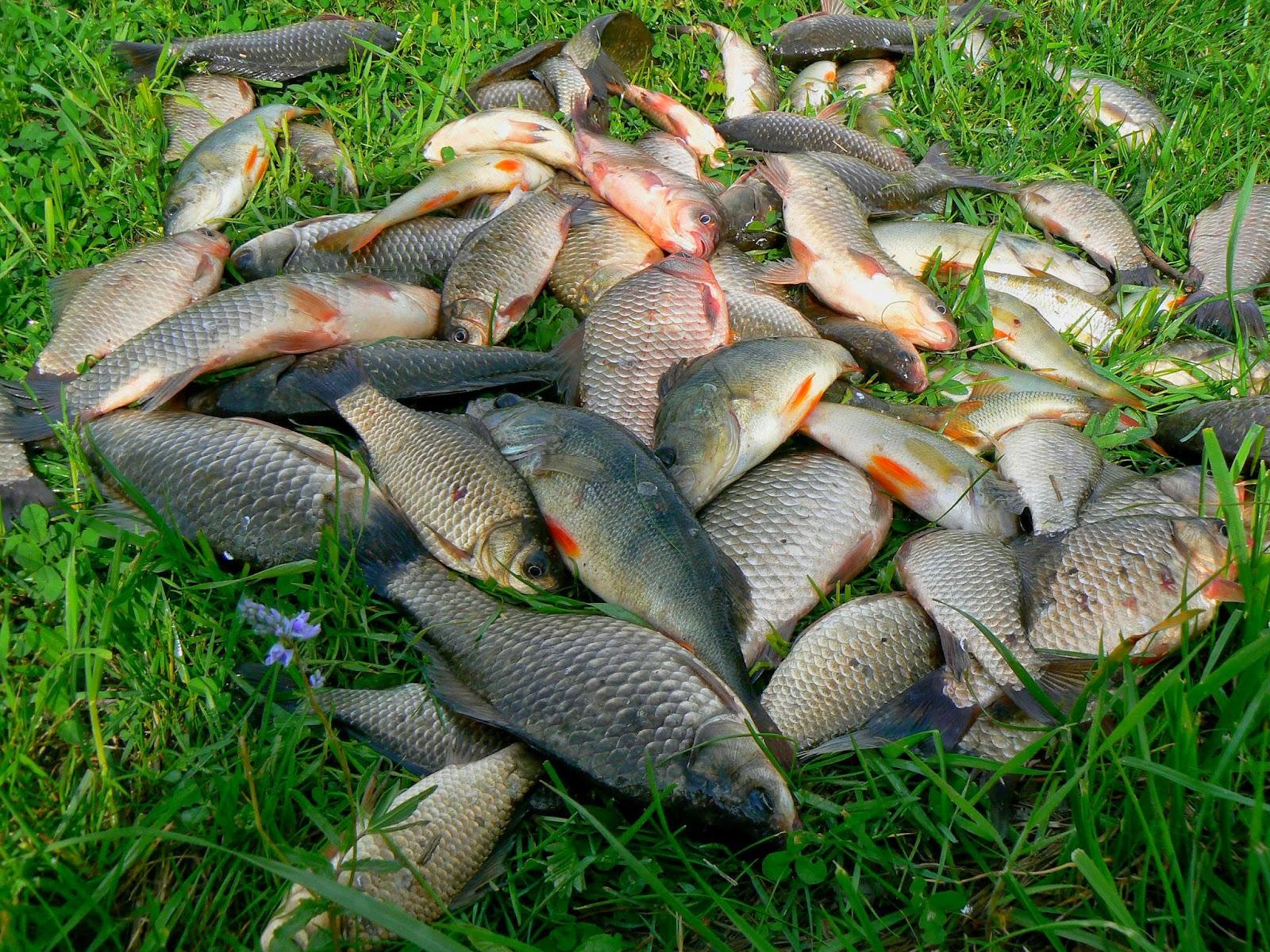 Как поймать много рыб