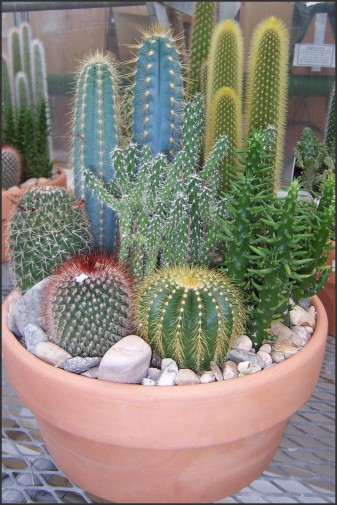 Garden Design Beautiful Cactus Ideas For Ones Garden