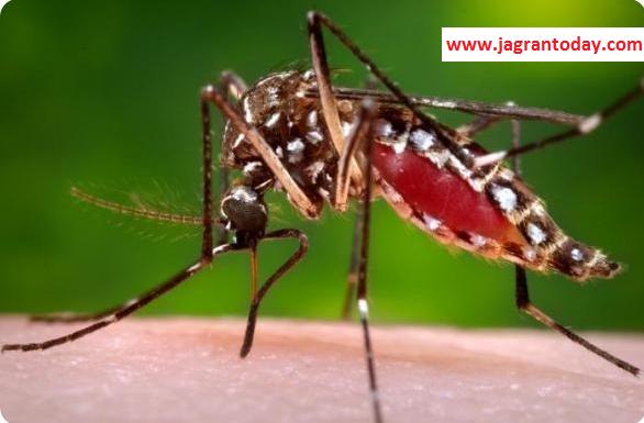 Dengue Bukhar ka Sabse Safal Illaj