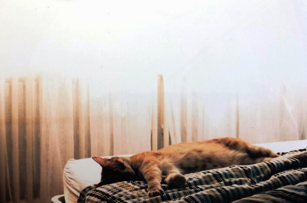 Le chat, cet intellectuel