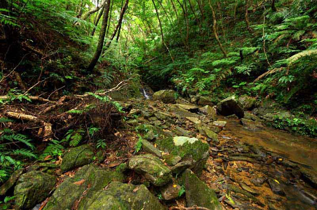 wide angle view of jungle stream,rocks