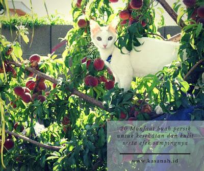 rasa buah persik