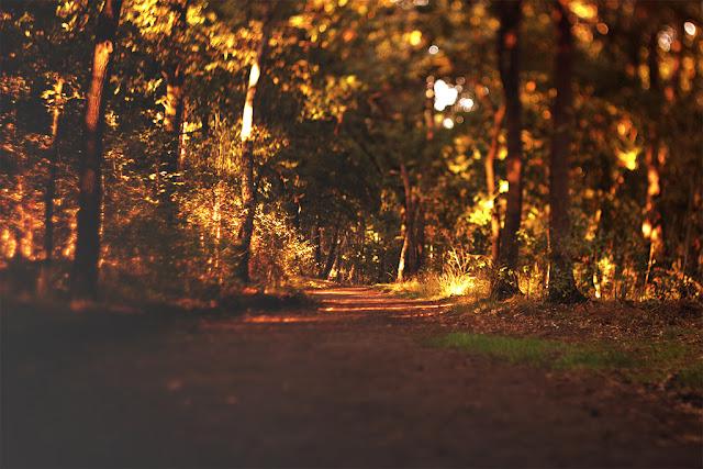 sie robi, autumn forest, las jesienia, herfst, bos