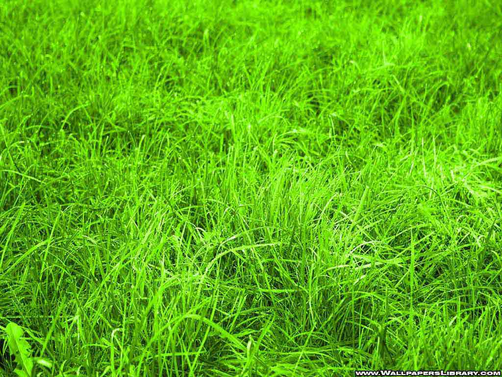 Green Grass Wallpapers | Your Title