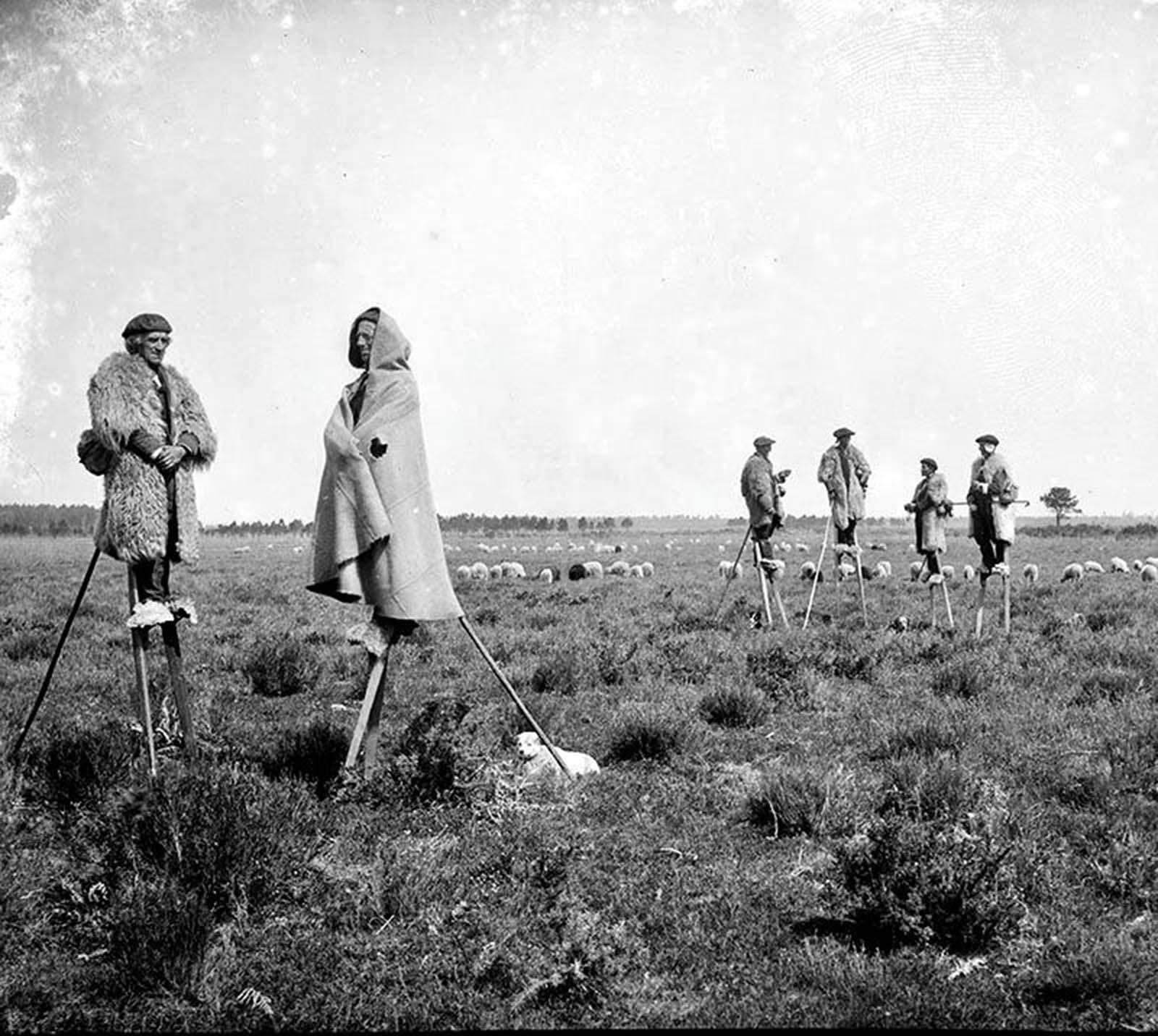 French shepherds in stilts.