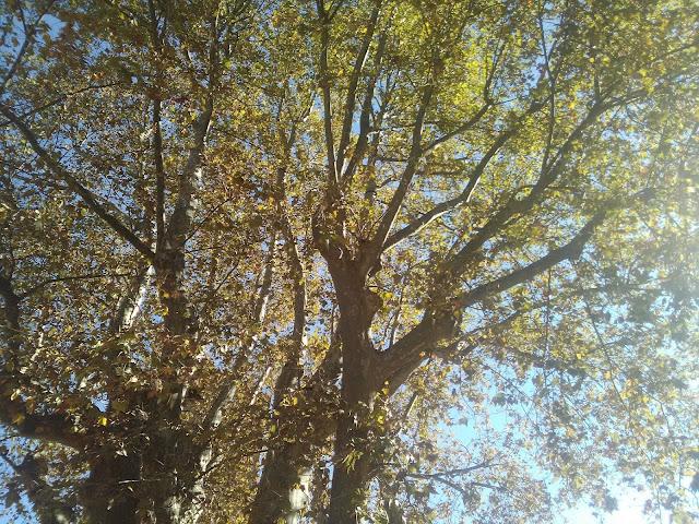 arbre feuille soleil méditation