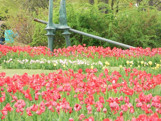 The tulip exhibit