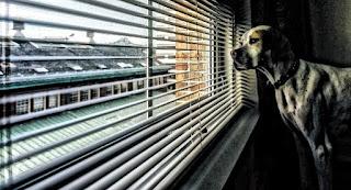janela para cães