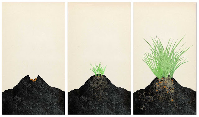 chufa, crecimiento, cultivo,  dibujo