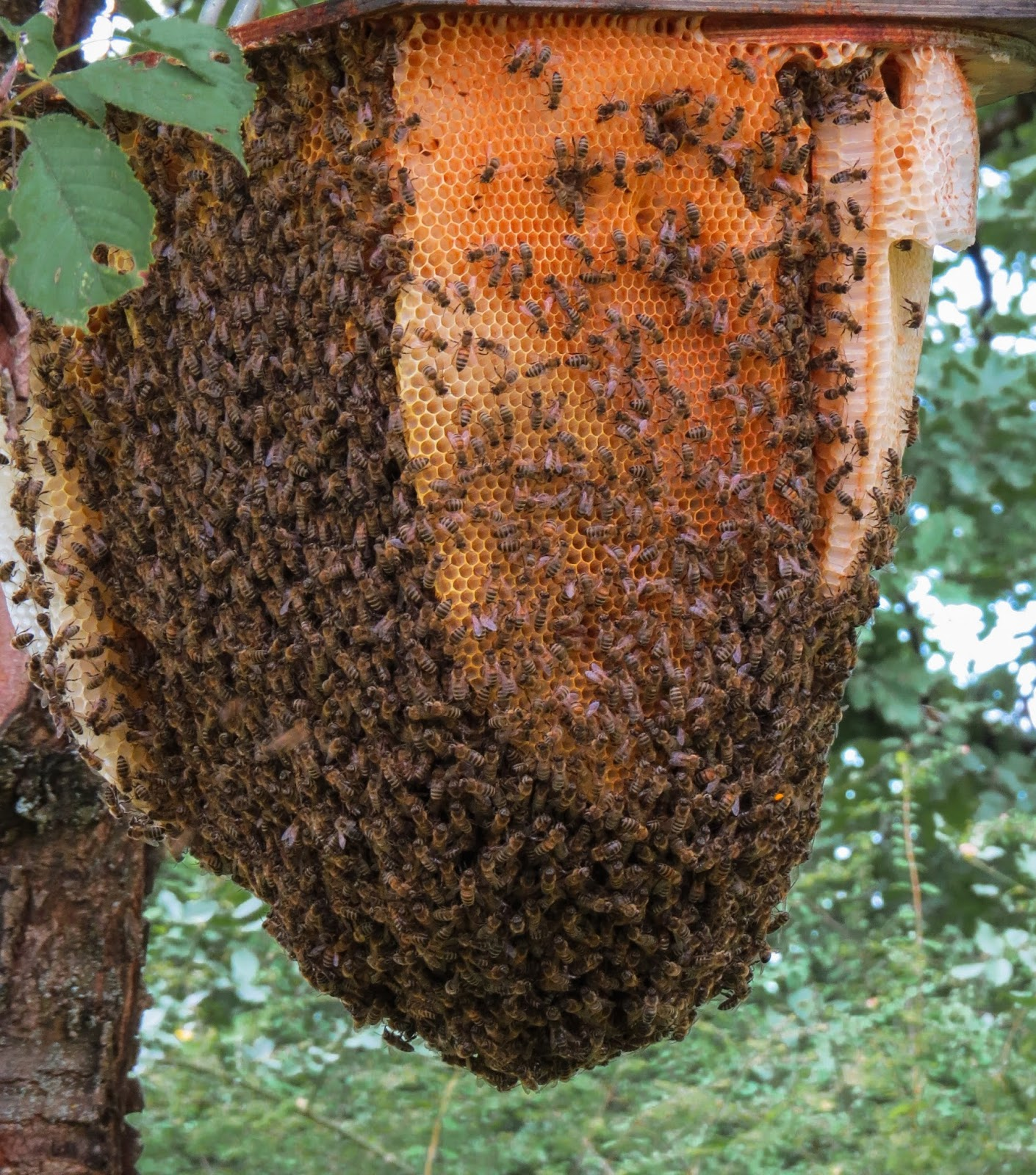 Picture of a beehive.