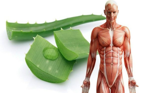 After Seeing This, You Will Drink Aloe Vera Juice Every Day