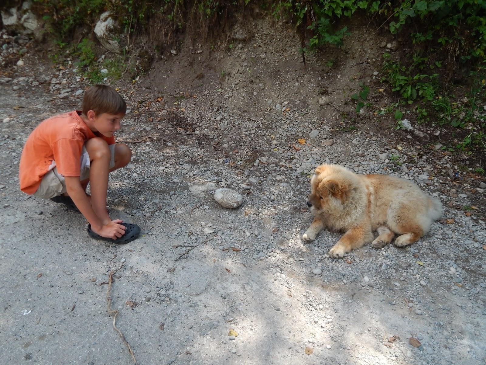 pes na hranicích Bosny a Hercegoviny