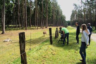 Das Kamerateam steht vor einem Zaun und filmt Ziegen