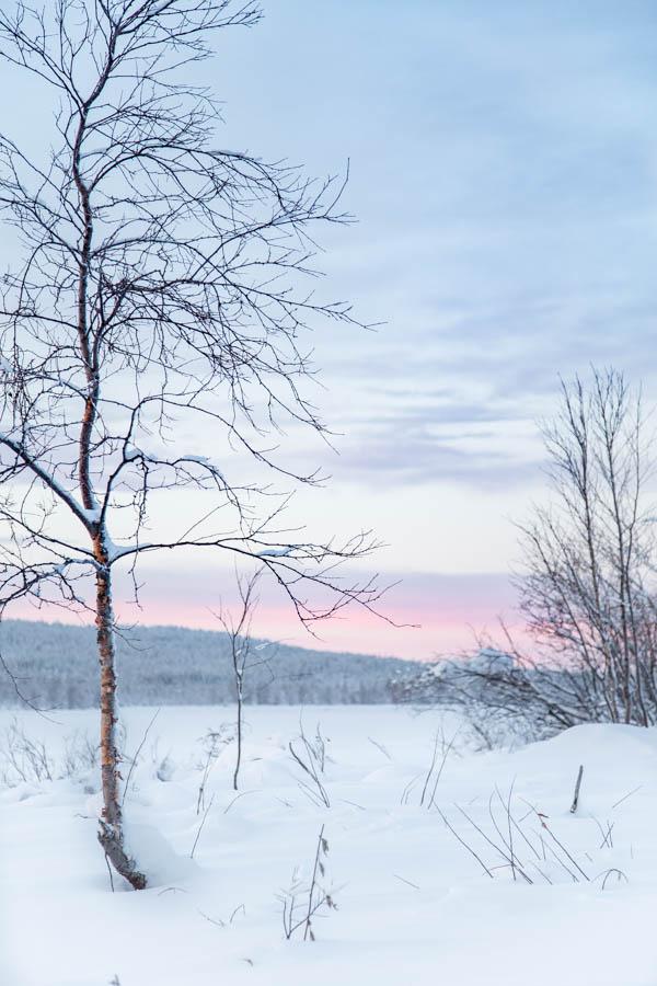 Kaamoksen värejä pohjoisen taivaalla Muonionjoella