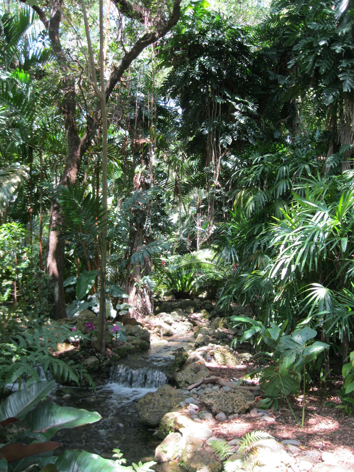 Florida free frugal fairchild tropical botanic garden - Fairchild tropical botanic garden ...