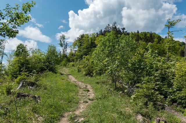 Von Hof bei Salzburg auf den Filbling  Wandern in der FuschlseeRegion 10