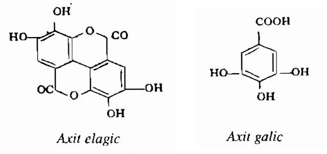 Thành phần hóa học Kha Tử - Terminalia chebula - Nguyên liệu làm thuốc Chữa Đi lỏng-Đau Bụng