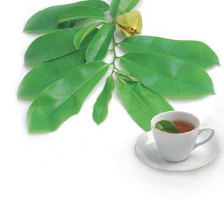 Tanaman Herbal Untuk Penyakit Kanker