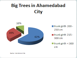 big trees, trees in Ahemedabad, indian city