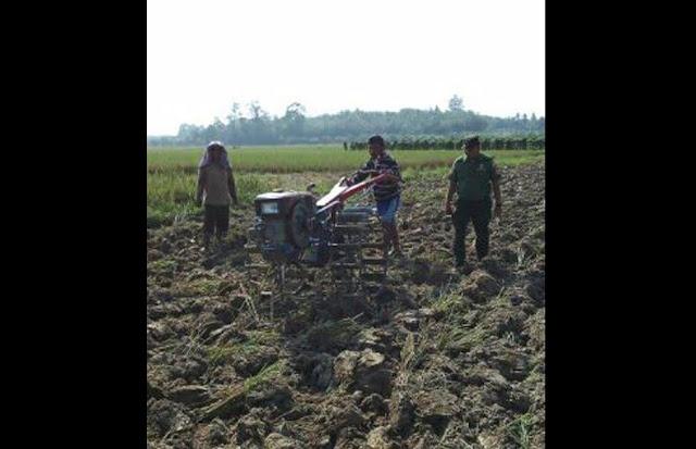 Anggota TNI ini Dampingi Petani Bajak Sawah dengan Traktor