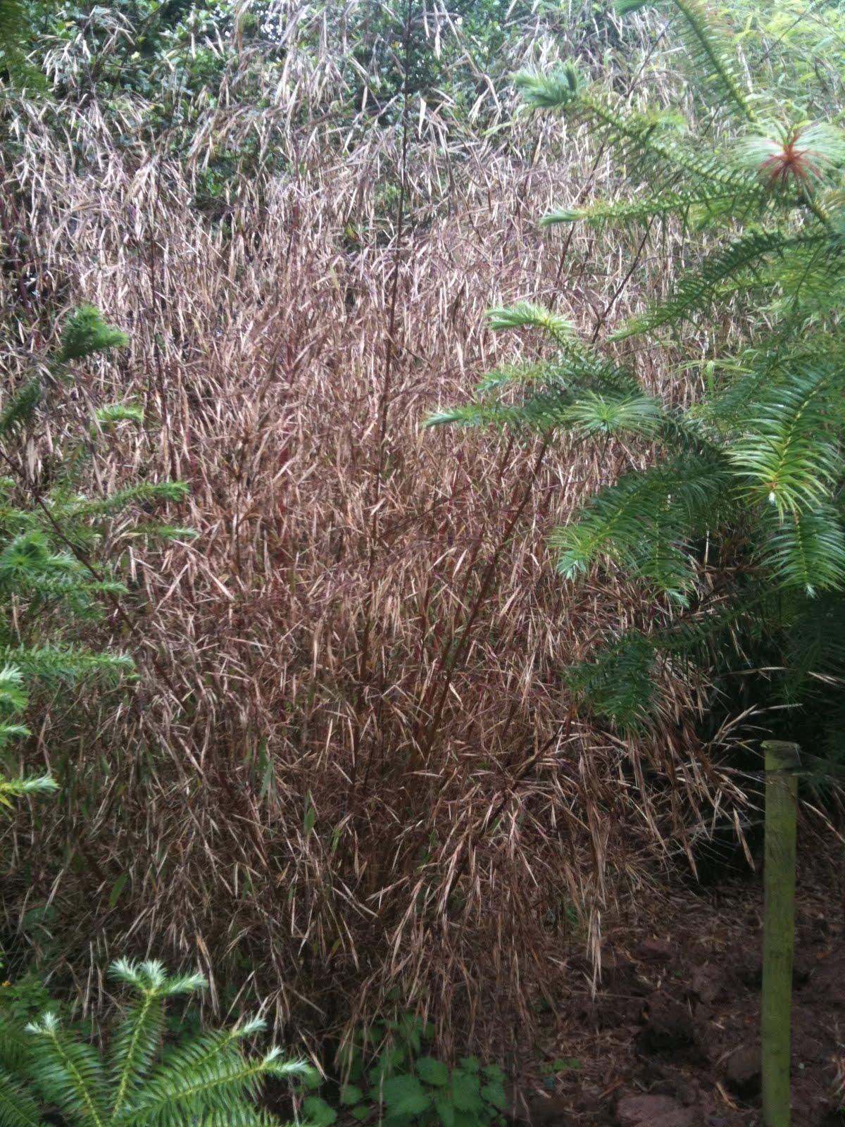 Imogen Bertin: Confused of Cork: Awayday at Stam's Bamboo Nursery