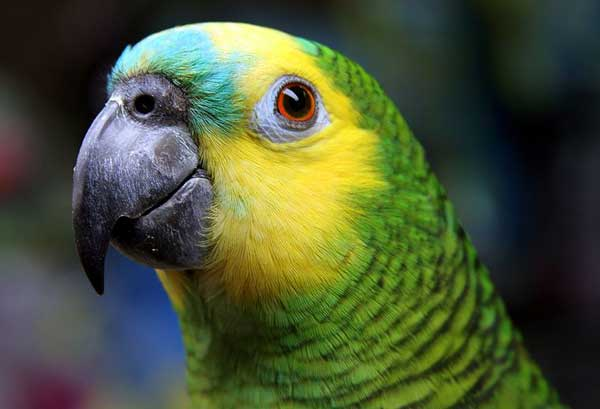 Parrot 'exposed' cheating husband's affair with housemaid to his wife by repeating flirty chitchat!