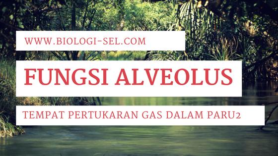 Fungsi Alveoli atau Alveolus
