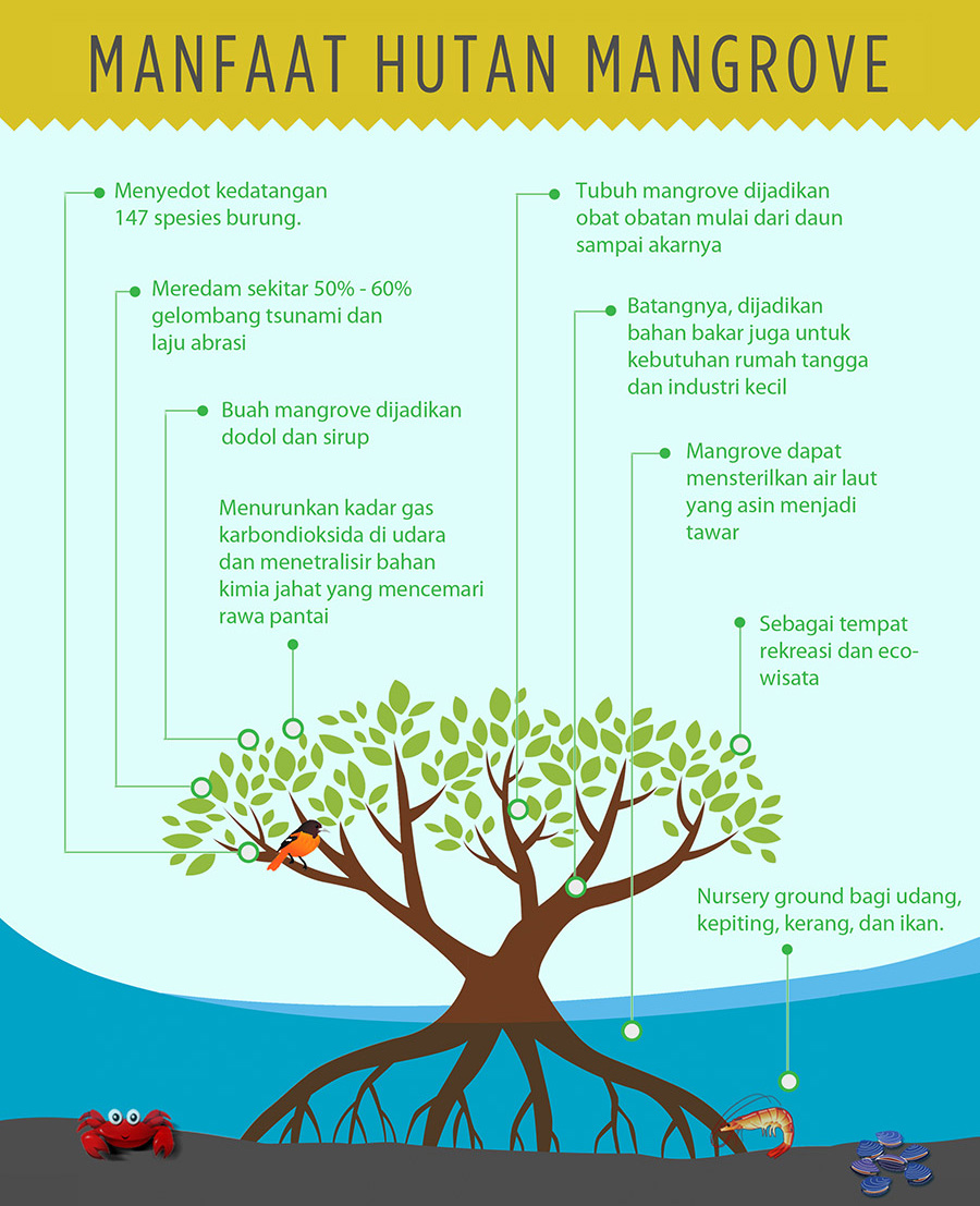 Sebutkan Manfaat Hutan Mangrove : sebutkan, manfaat, hutan, mangrove, Manfaat, Hutan, Bakau, (Mangrove), Definisi, Pengertian, Secara, Adalah